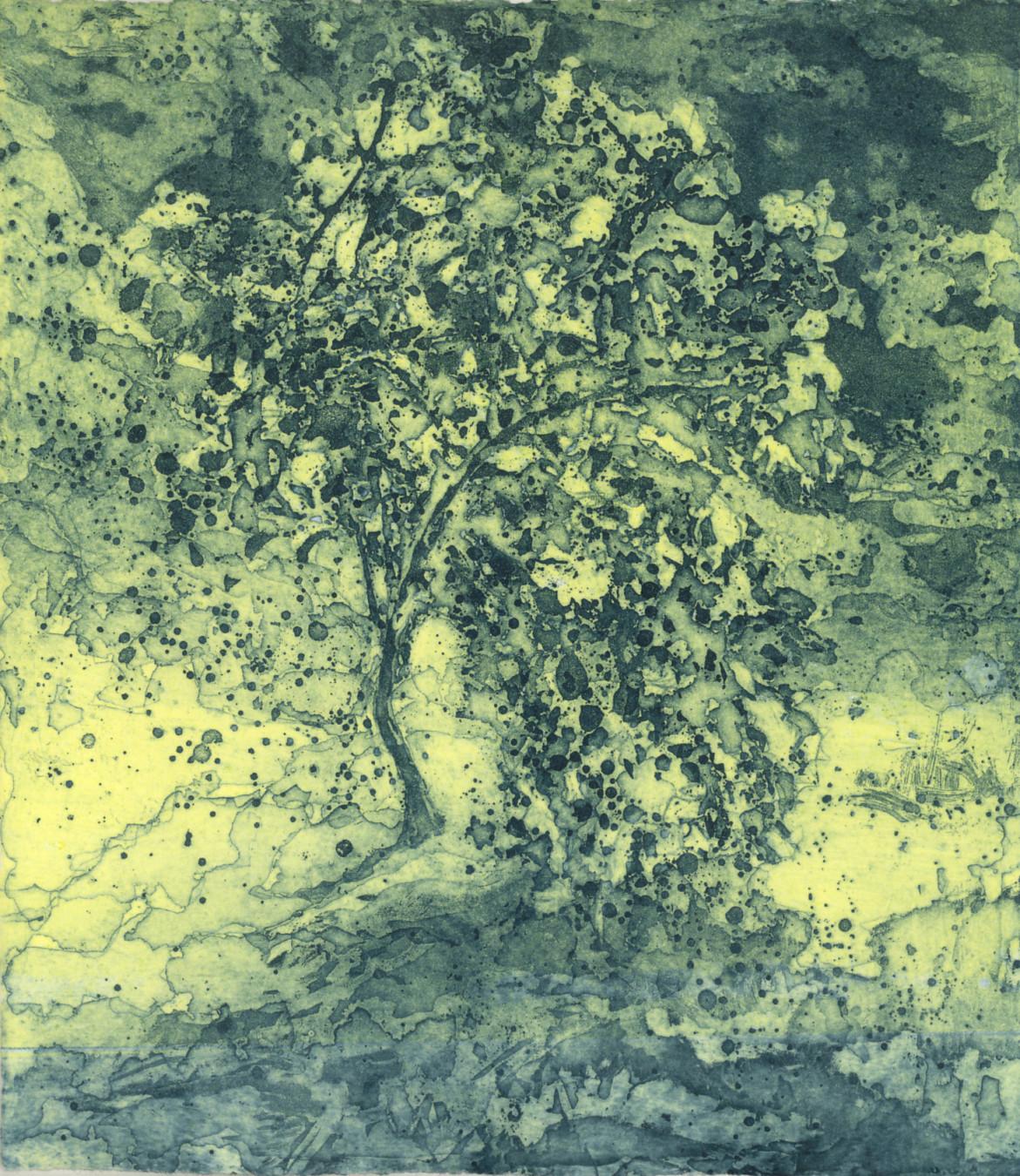 Quince Tree for Birdwood