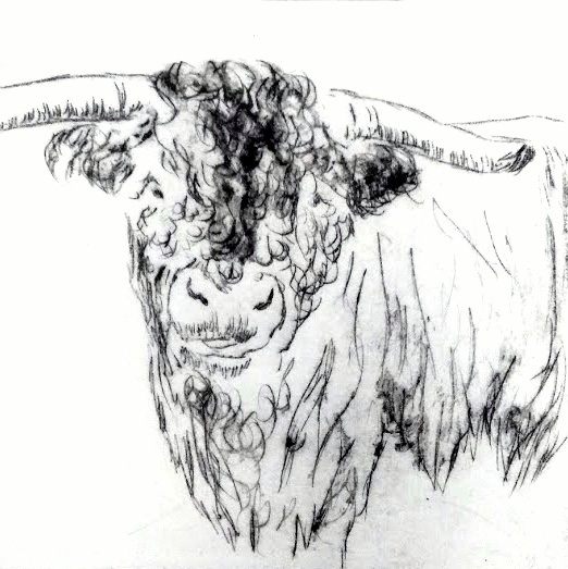 Bull, Ruth Wheaton Slamseys Printmaking Essex