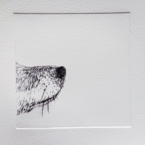 Nosy, Jack Russell, Ruth Wheaton Slamseys Printmaking Essex