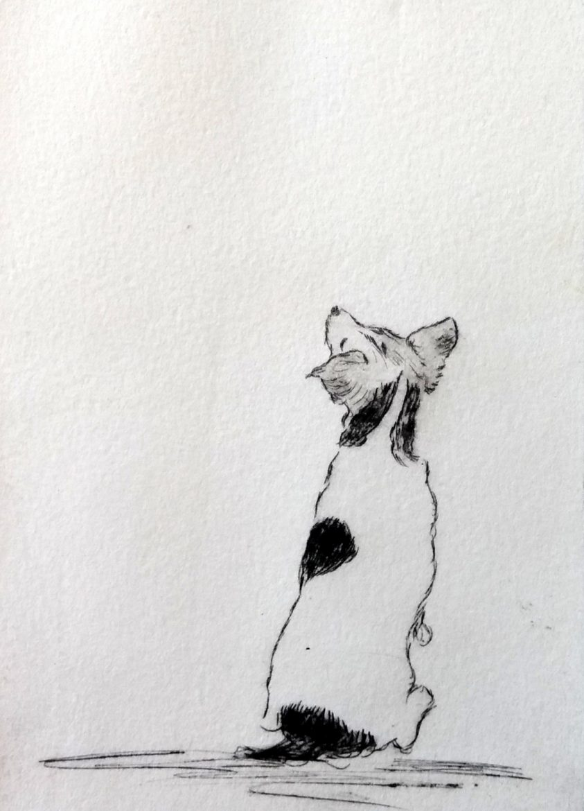 jack russell sitting drypoint etching by ruth wheaton printmaker